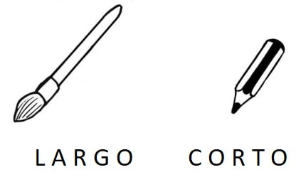 explicacion conceptos largo y corto